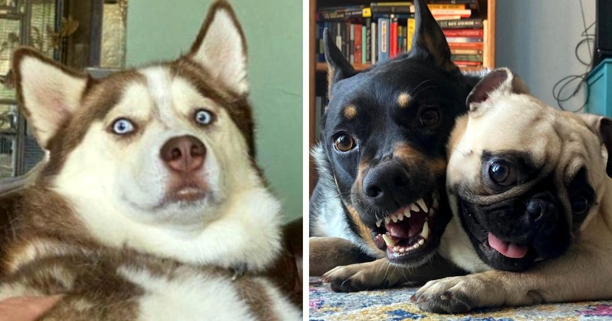 18 эмоциональных фотографий собак, чьи выражения мордочки говорят о себе громче слов