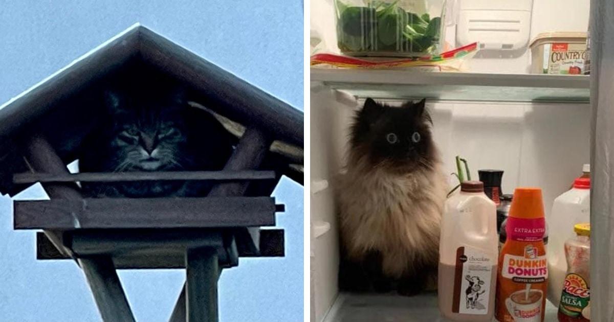 15 случаев, когда коты показали свою беспардонную наглость и были обнаружены там, где их не ждали
