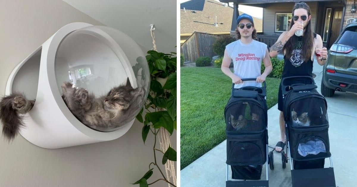 20 фотографий крайне избалованных котов, глядя на которых думаешь: «Чтоб я так жил!»
