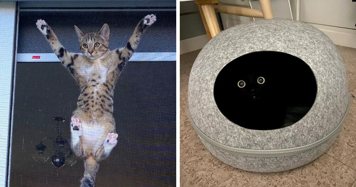 17 милых и забавных фотографий котов, смотреть на которых можно без причин, запретов и дополнительных поводов