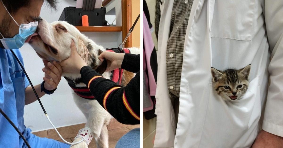 16 фото, которые служат доказательством тому, что быть ветеринаром не только ответственно, но и очень весело