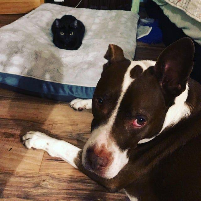 18 случаев, когда коты наглым образом отжали лежанки у собак и даже не думали раскаиваться в содеянном