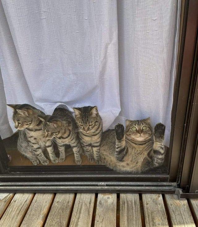 18 котиков и собак, чья дурашливость умиляет всех вокруг, а они даже не прикладывают к этому никаких усилий