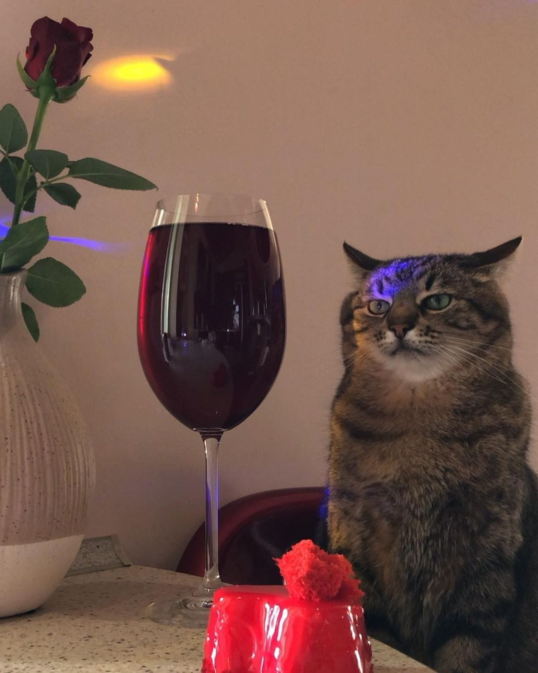 Кот Степан грустит под музыку и глядит на коктейль. И он уже стал символом всех тех, кто скучает на вечеринках