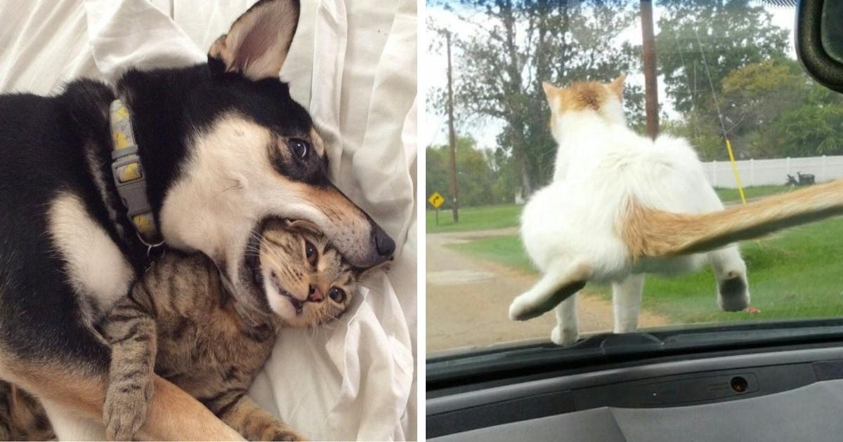 16 забавных фото собак и котов, которые решили забыть о хороших манерах, ведь им можно простить всё