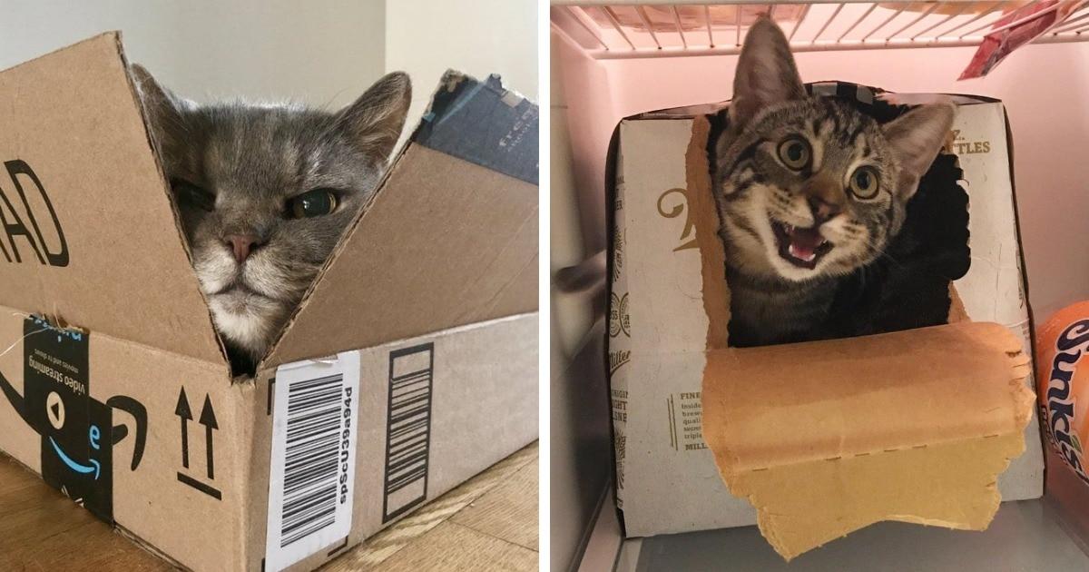 17 милейших и забавных фотодоказательств того, что коты и коробки просто созданы друг для друга