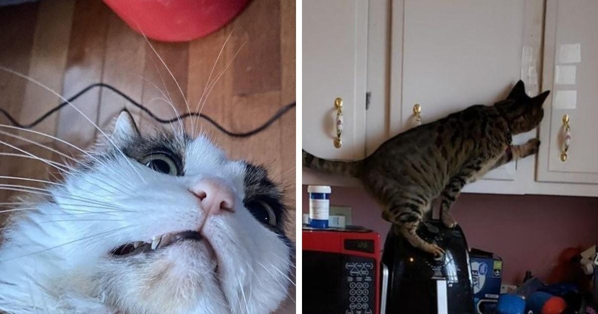 16 фото, которые доказывают, что когда в доме появляется кот, там больше никогда не придётся скучать