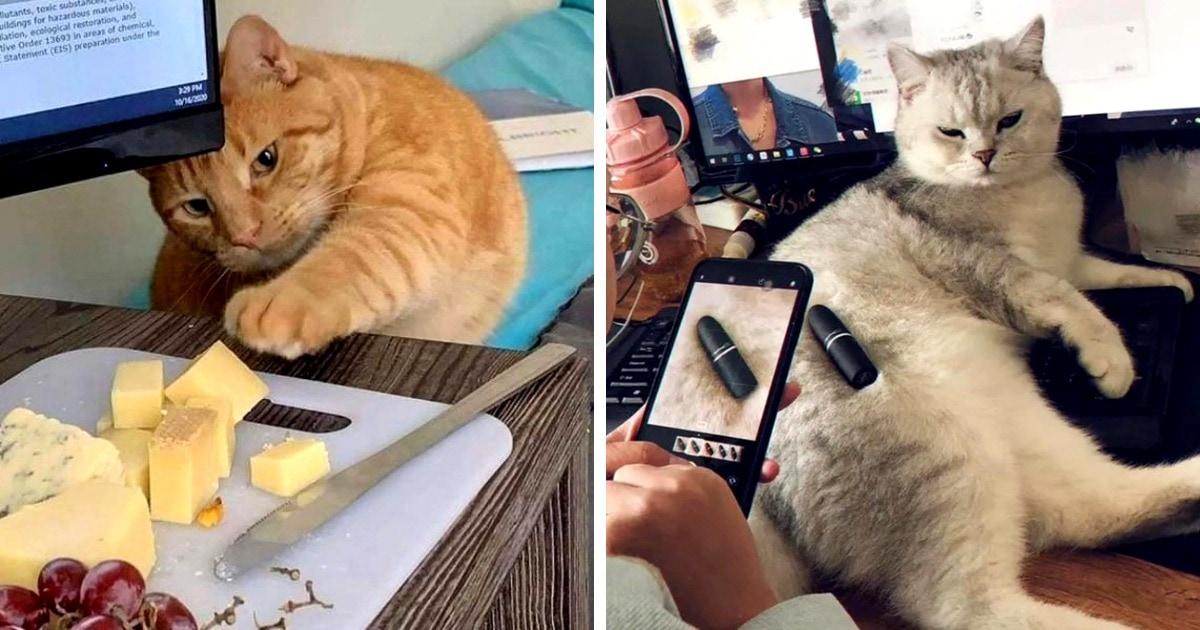 17 фотографий котиков, на которые можно смотреть так же долго, как на огонь и воду