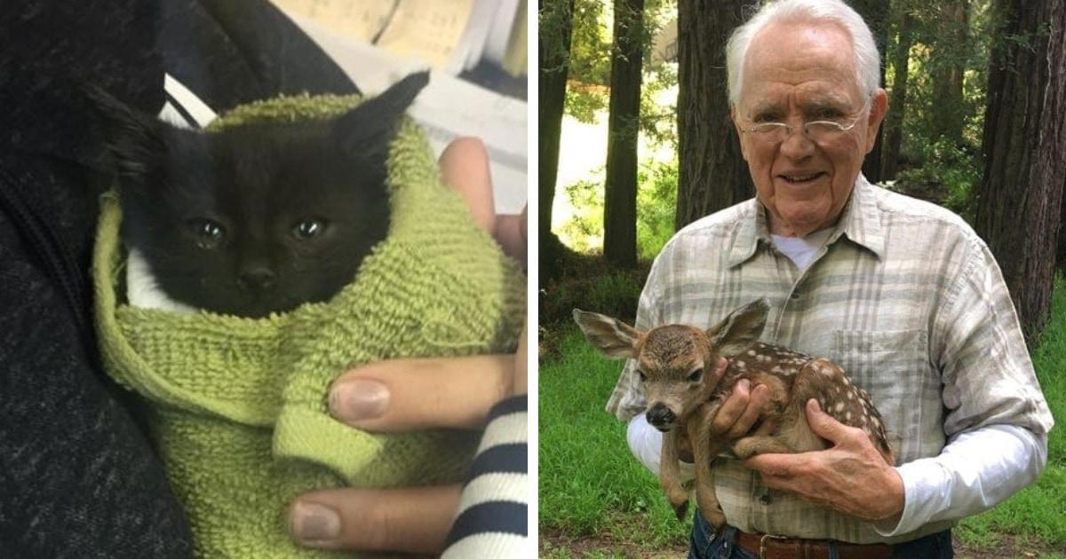 15 случаев, когда люди увидели зверьков в беде и не раздумывая пришли к ним на помощь