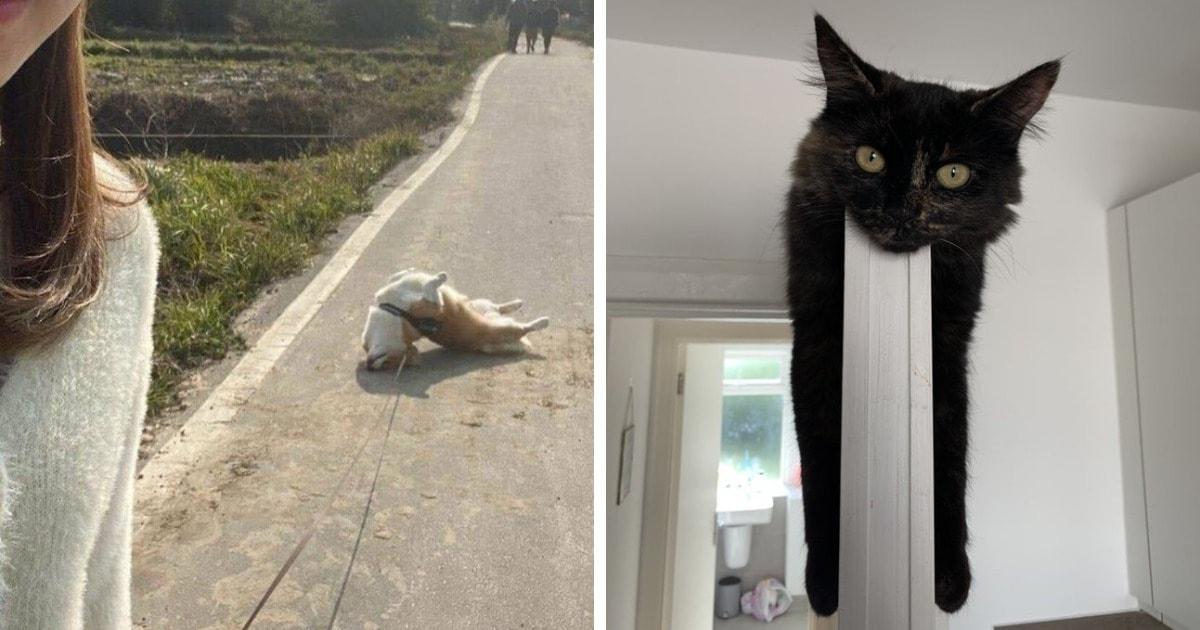 18 случаев, когда владельцы котиков и собак задавались вопросом «что происходит с моим питомцем?»