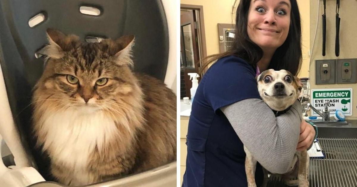 16 эмоциональных котов и собак, которые так ярко проявляют свои чувства, что можно обойтись и без слов