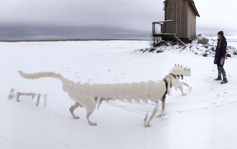 16 случаев, когда панорамная съёмка сумела создать из домашних любимцев совершенно необычных зверят