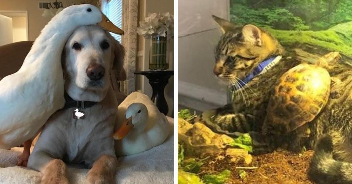 15 домашних питомцев, которые влились в компанию других животных и доказали, у дружбы нет преград
