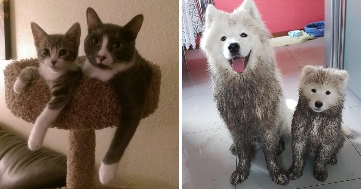 16 снимков котят и щенят, которые во всём хотят быть похожими на своих пушистых мам и пап