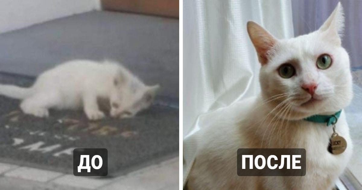 15 фотографий бездомных котов до и после того, как их нашли люди, которые смогли дать им заботу и защиту