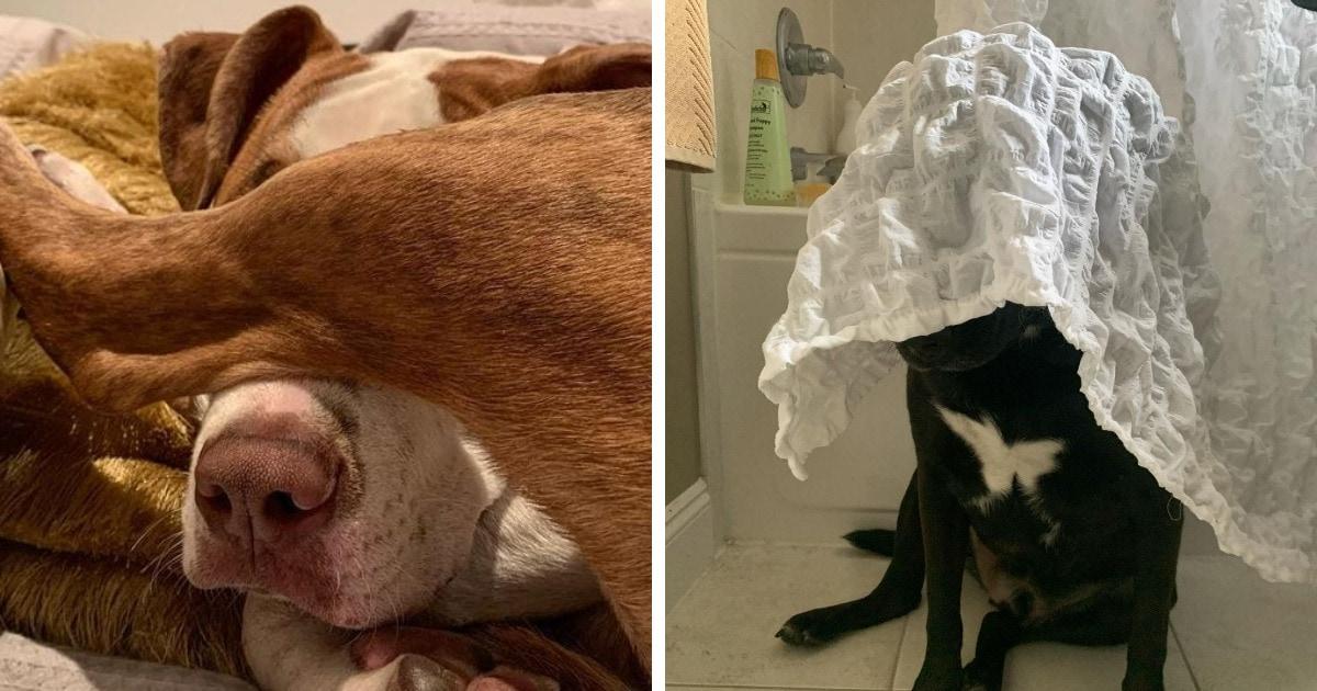15 забавных случаев, когда котики и собаки честно пытались спрятаться, но всё же их что-то выдало