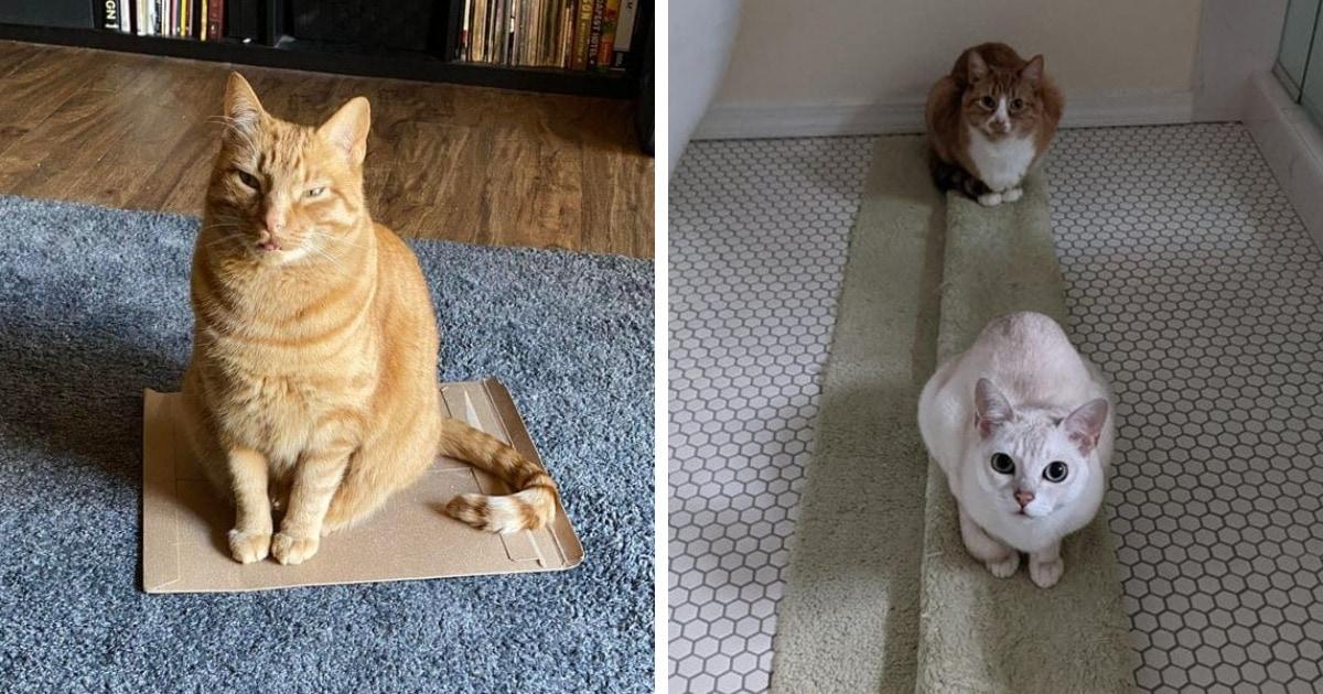 16 забавных кадров о том, что когда нужно выбрать уютное место, у котов появляется своя особая логика