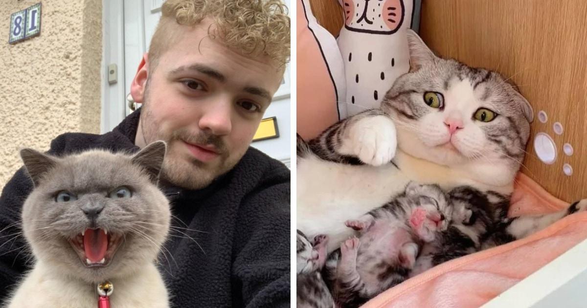 15 фотографий котов и кошек, которые были не в восторге от самых разных событий и вовсе этого не скрывали