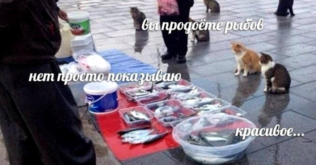 «Вы продоёте рыбов?»: что за мем с котами и рыбой, на котором все разговаривают с ошибками