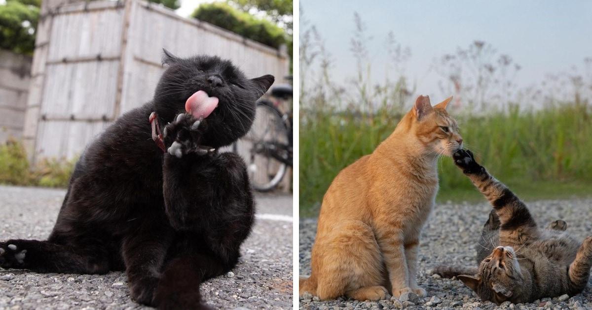 19 работ японского фотографа, который снимает уличных котиков так, что их характеры чувствуются через экран