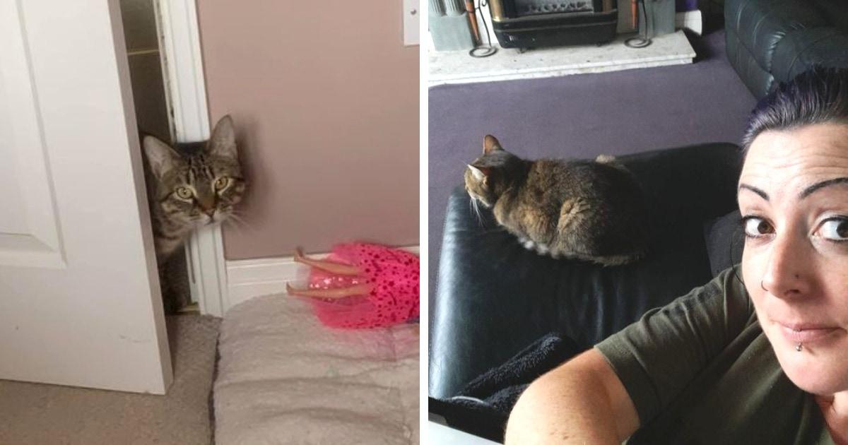 16 забавных случаев, когда люди обнаружили дома котов. Но это были совсем не их коты!