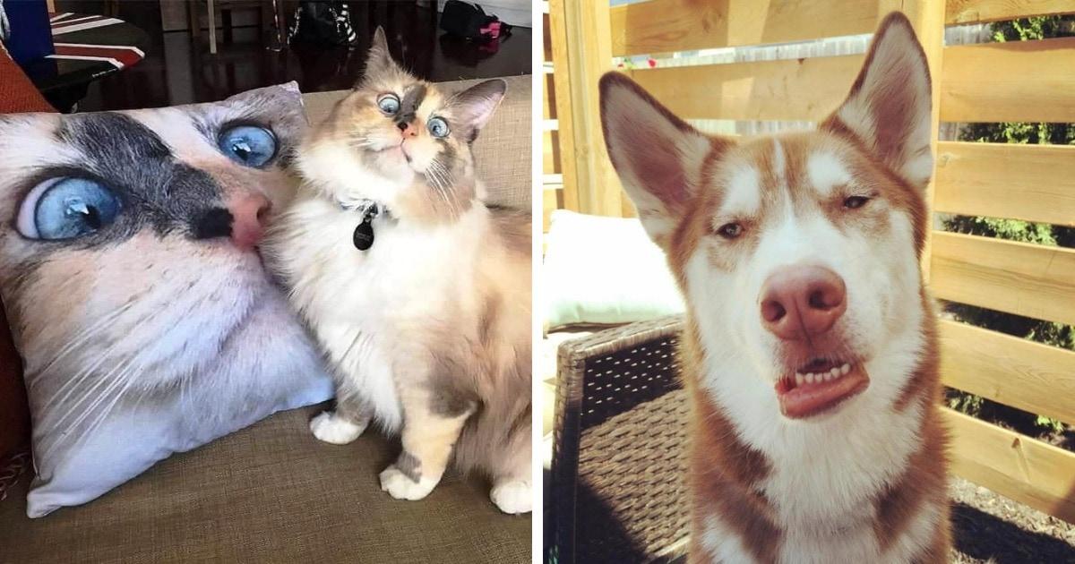17 забавных фото домашних животных, которые доказывают, что всё очарование питомцев таится в их дурашливости