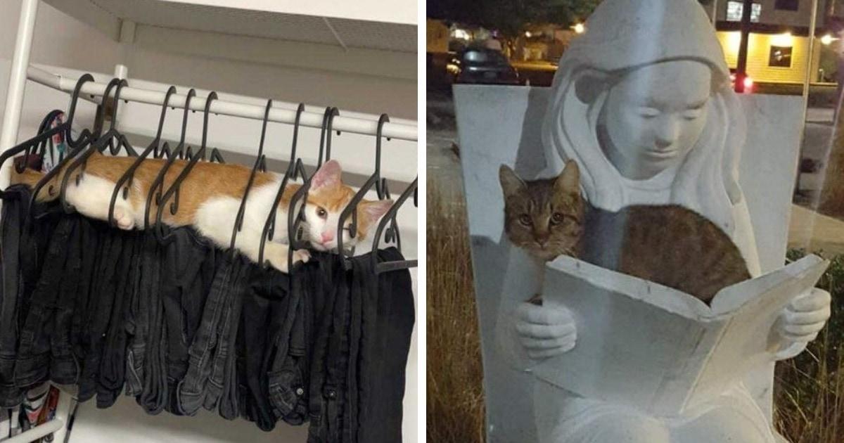 15 случаев, когда наглые коты были обнаружены там, где им было не положено находиться