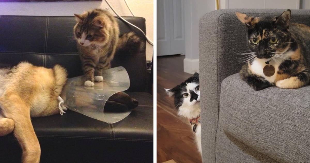 15 забавных примеров того, как по-разному могут уживаться несколько животных в одном доме