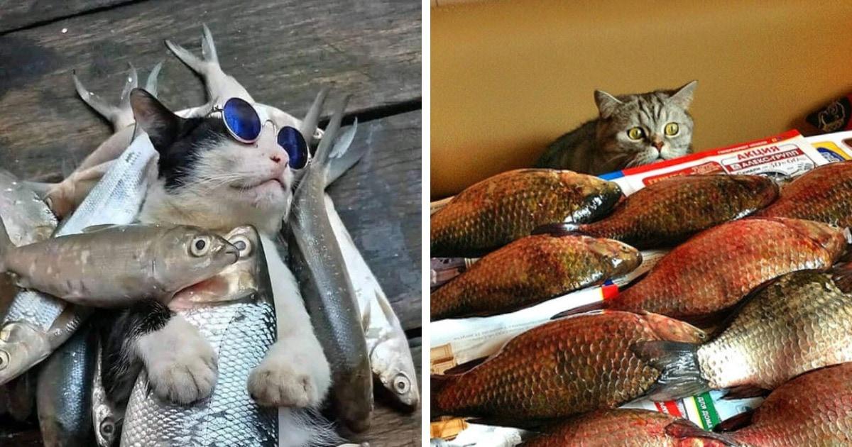18 фотографий котиков и рыбов, глядя на которые так и хочется сказать «красивое»