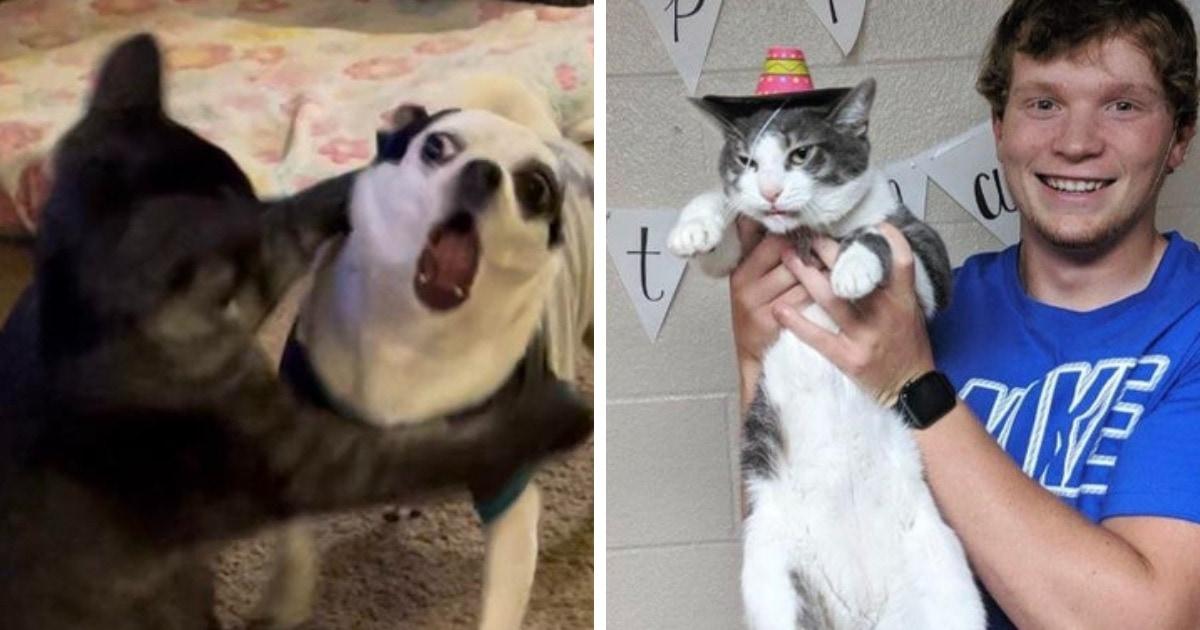 17 забавных фото котов и собак, чьи чувства и эмоции явно написаны на  мордочках