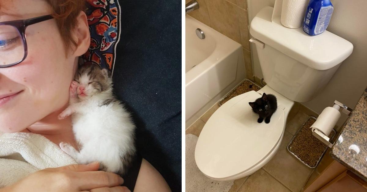 18 котят, которые несмотря на свою маленькость могут занять всё место в человеческом сердечке