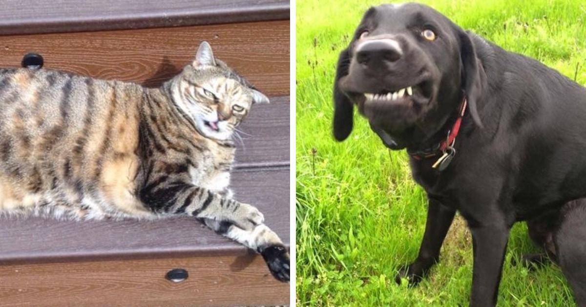 15 забавных снимков собак и котов, которые забыли включить режим фотогеничности и всех повеселили
