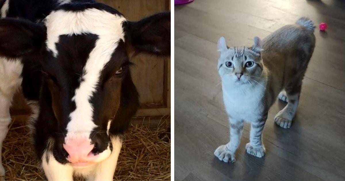18 случаев, когда природа наградила животных такими необычными чертами, что нарочно не придумаешь