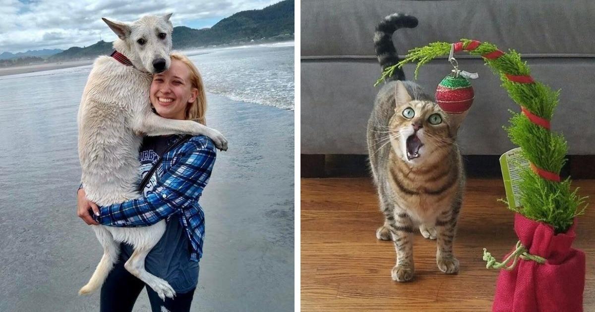 17 случаев, когда коты и собаки столкнулись с чем-то в первый раз и ярко показали свои эмоции