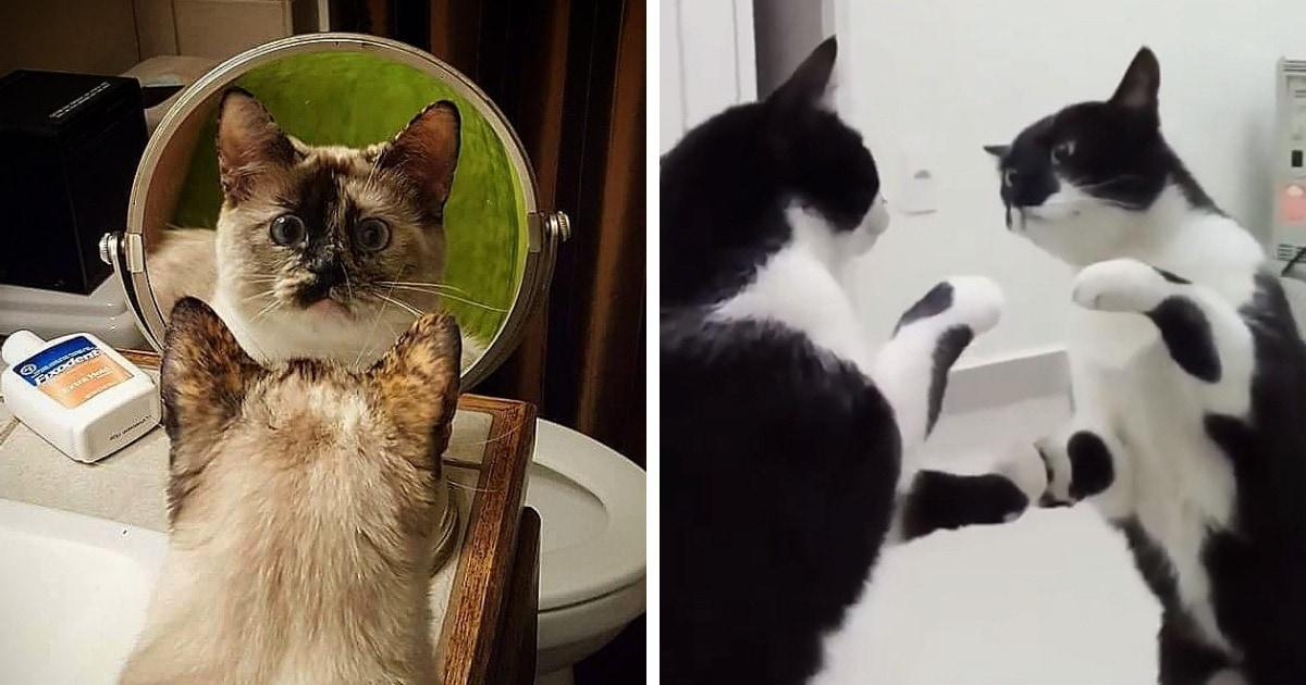 16 милых и забавных фотографий животных, которые обнаружили зеркала и не могут на себя наглядеться