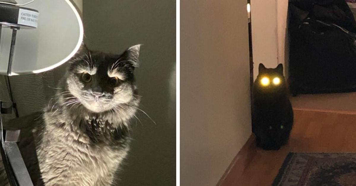 16 фото зловещих и пугающих котищ, которые решили показать свою пушистую тёмную сторону