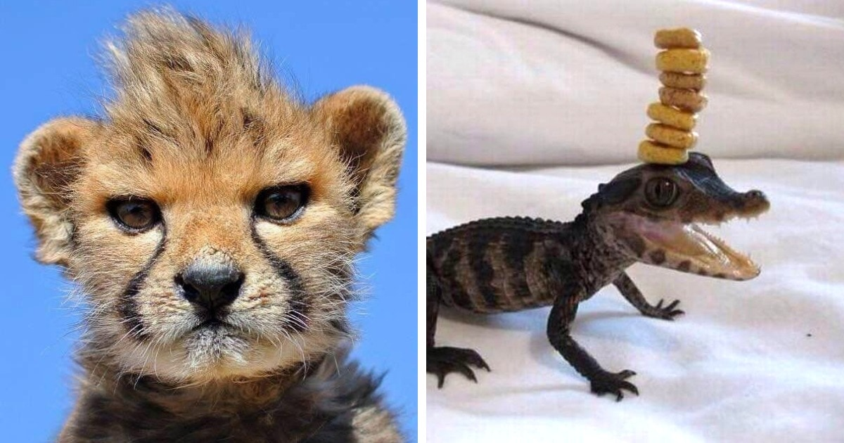 14 очаровательных снимков малышей животных, которые вскоре вырастут в очень опасных типов