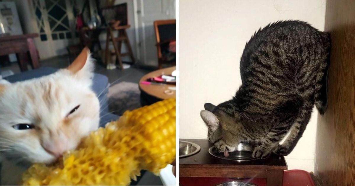 """16 фото, которые доказывают, что как только в доме появляется кот, о слове """"скучно"""" можно позабыть"""