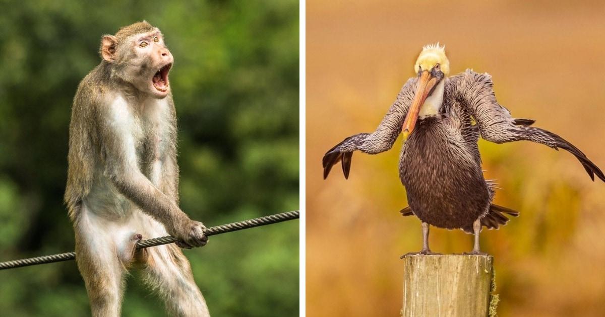 Конкурс комедийных фотографий дикой природы назвал своих финалистов и показал лучшие снимки 2021 года