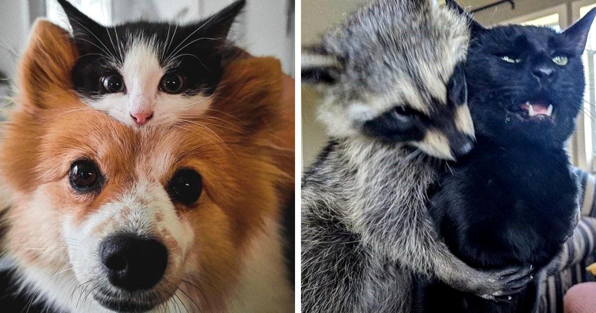 19 случаев, когда животные нашли себе друзей, и теперь не могут с ними расстаться
