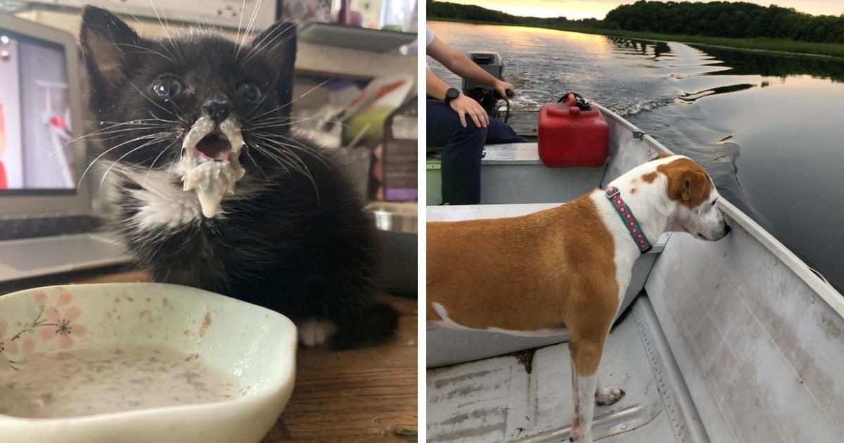 16 котиков и собак, чья дурашливость настолько очаровательна, что она совсем не кажется недостатком