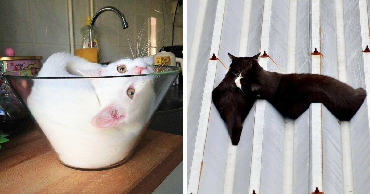 19 забавных фотографий котов, которые обладают всеми свойствами жидкости
