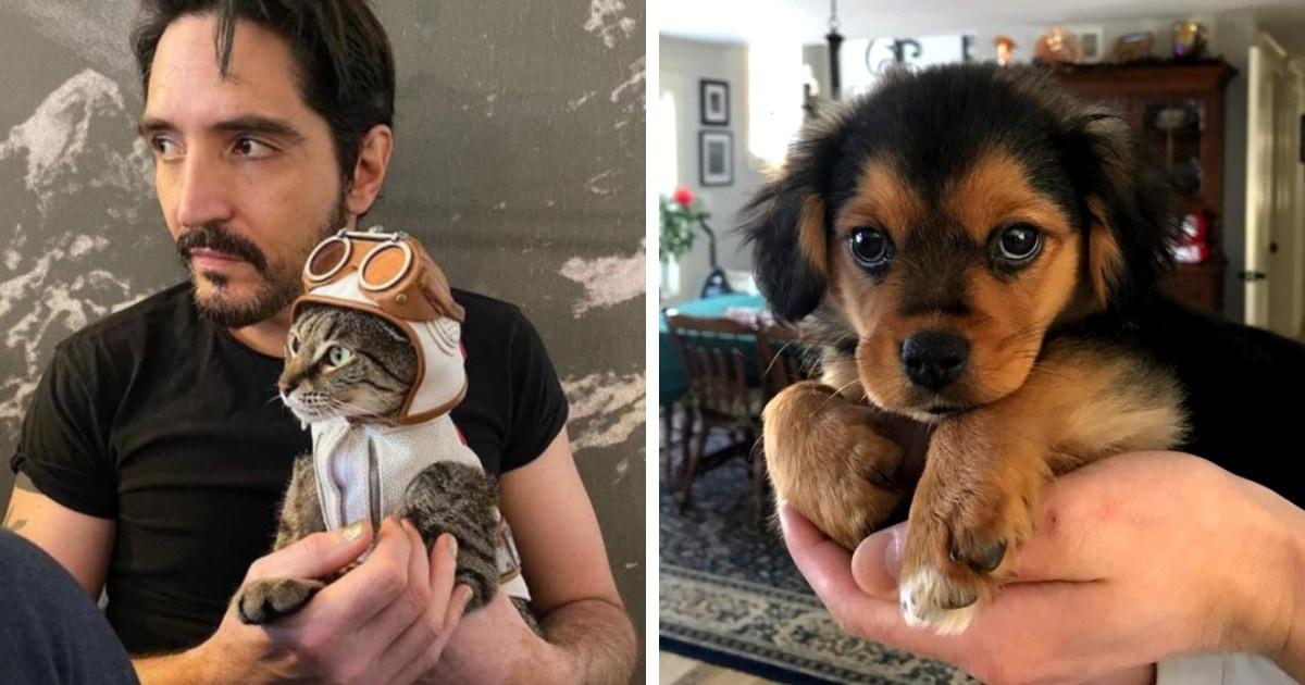 15 случаев, когда люди спасли животных с улицы или из приюта, и это стало счастьем для всех