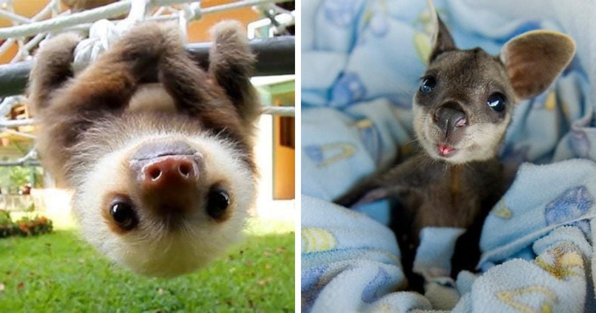 18 фото малышей животных, которые способны вызвать не меньше умиления, чем котята и щеночки