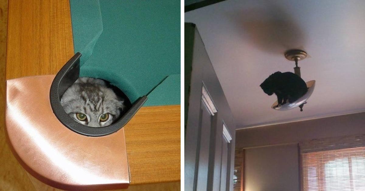 17 забавных ситуаций, когда наглые коты были обнаружены там, где их вообще не ждали