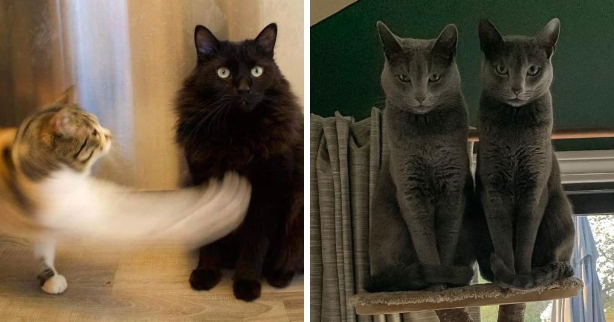 16 фото, которые доказывают, что с двумя котами жизнь тут же становится в два раза внезапнее и веселее