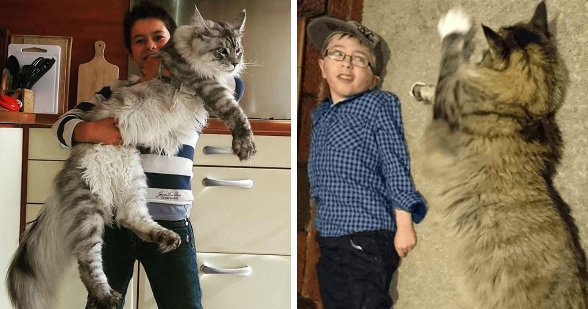 18 фотографий ну очень больших котиков, которые наверняка мурчат так, что земля трясётся