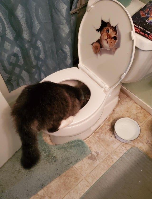 17 милых и забавных фотографий котов, которые выглядят абсолютными дурашками, но такими смешными!