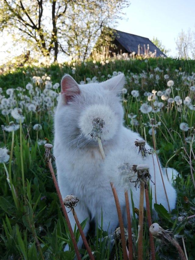 19 забавных котов, которые играют в прятки с разной степенью успешности, но одинаково смешно