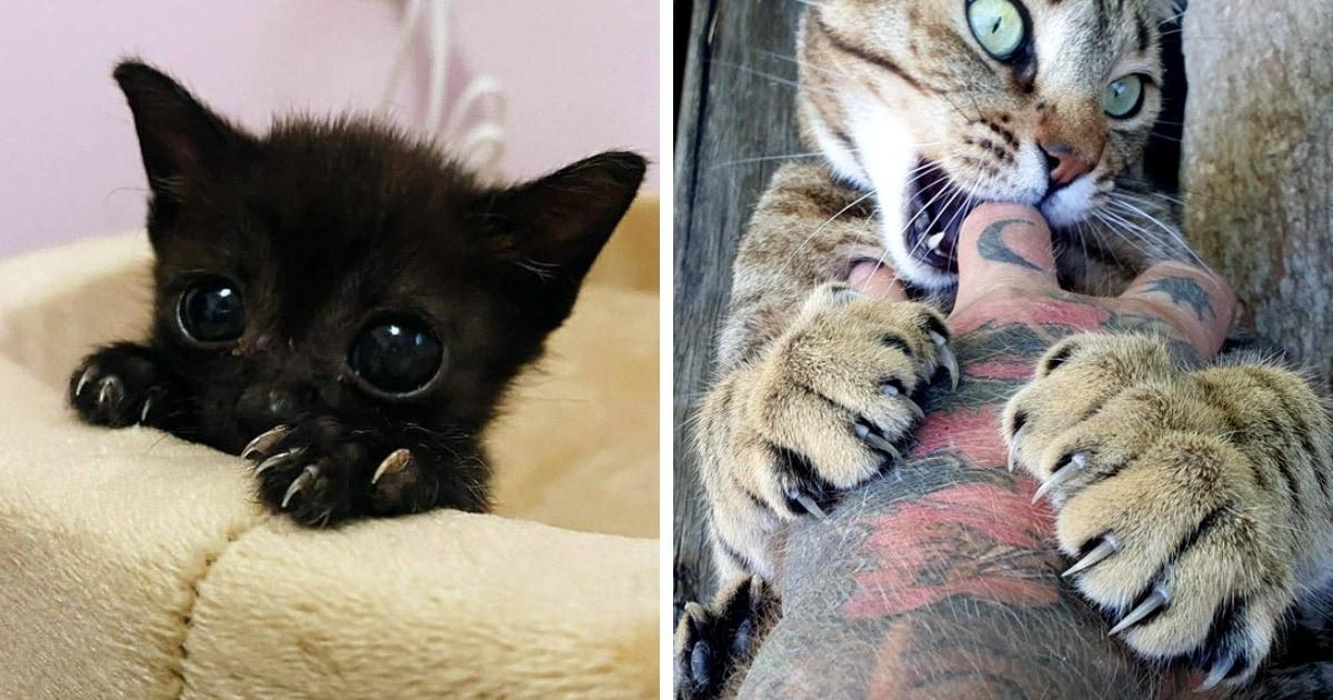 18 фотографий котищ и их когтищ, которые никому не дадут забыть об их хищной натуре